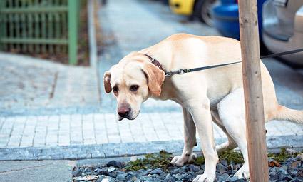 В Израиле у собак будут брать образцы ДНК для опознания хозяев, не убирающих за своими питомцами